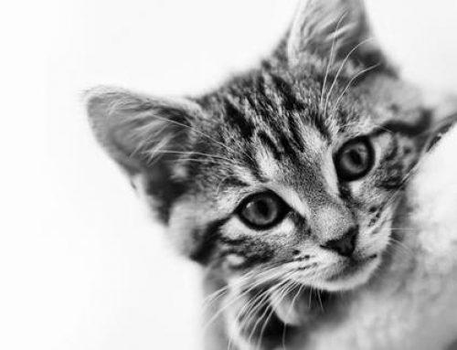 Man slog ihjäl katt med en sten
